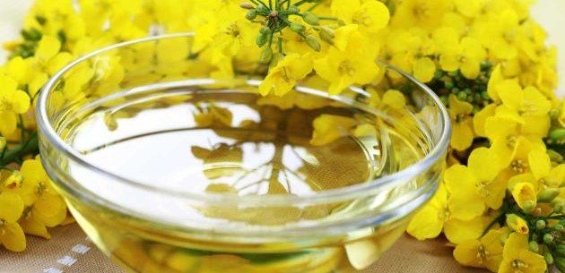Por que o óleo de canola é saudável?