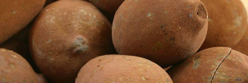 Benefícios do cupuaçu e suas propriedades nutricionais