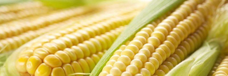 Propriedades e benefícios do milho para a saúde