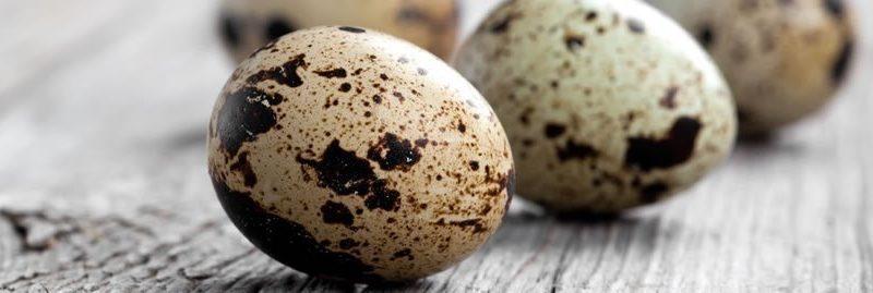 Benefícios do ovo de codorna para a saúde