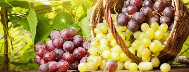 Usos, receitas e benefícios da uva para a nossa saúde